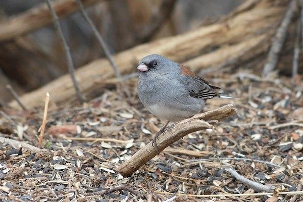 Bird at Randall Davey Audobon Center