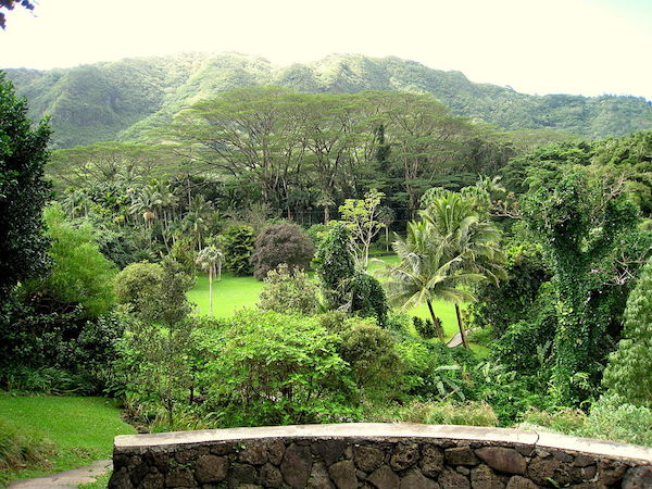 View of Lyon Arboretum - Places to visit in Honolulu