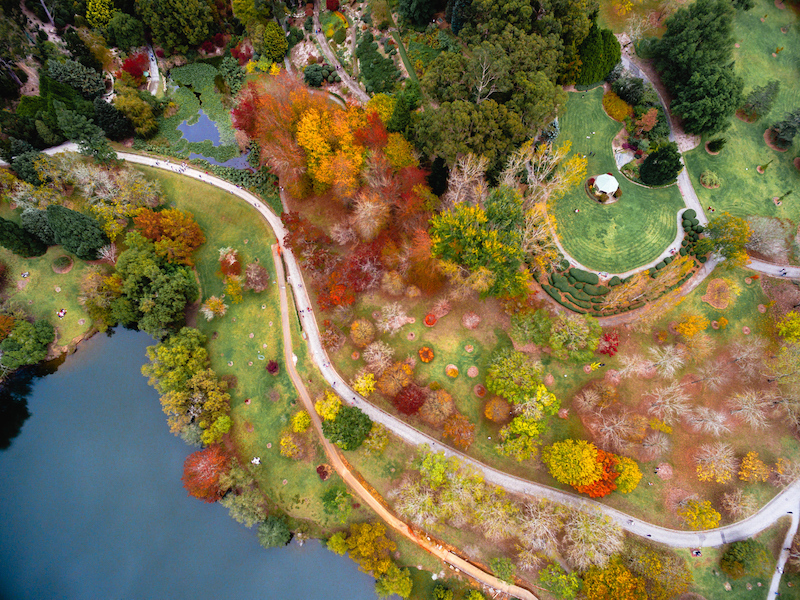 Birds eye view of lake and fall foliage