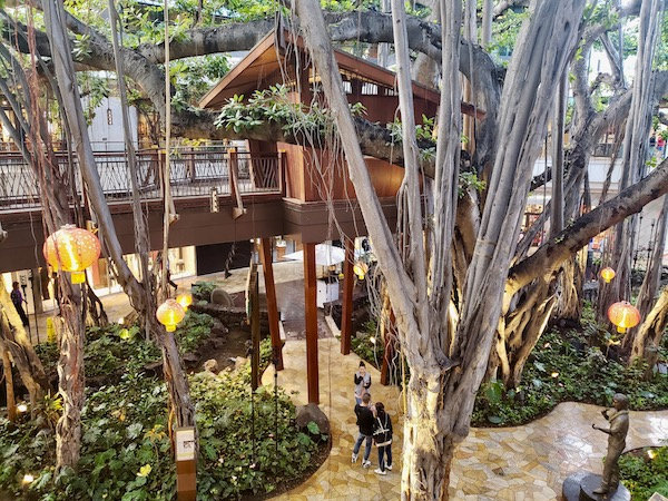 Tree house in huge banyan tree indoors - What to do in Waikiki