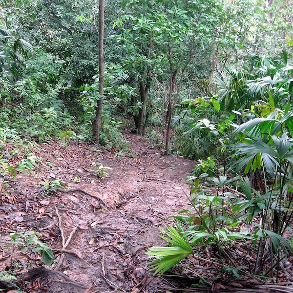 Darien National Park jungle is a one of the top Panama destinations