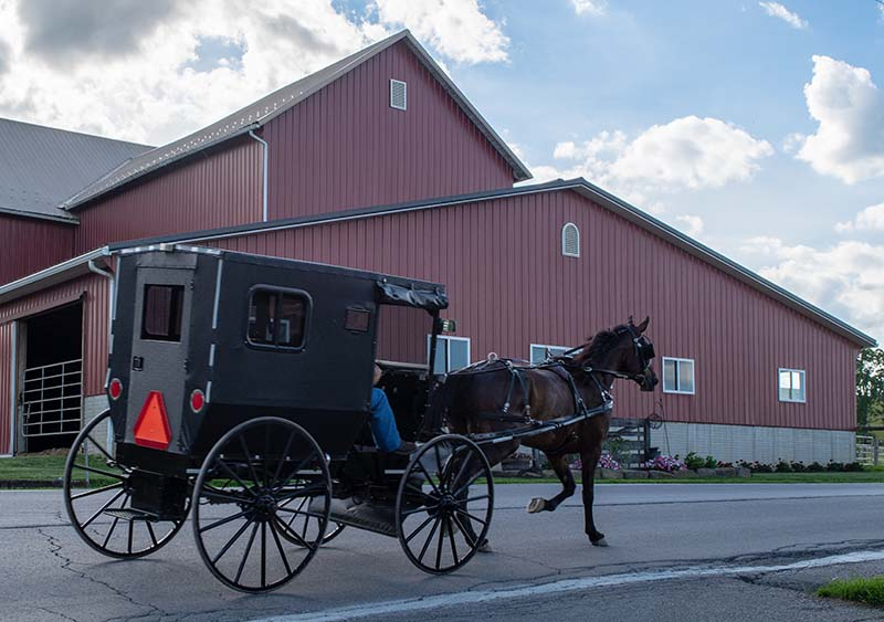 Amish Buggy in Ohio Amish Country