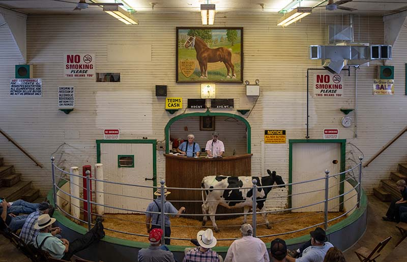 Kidron Livestock Auction