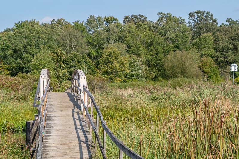 White Memorial Conservation Center Boardwalk and Wetlands