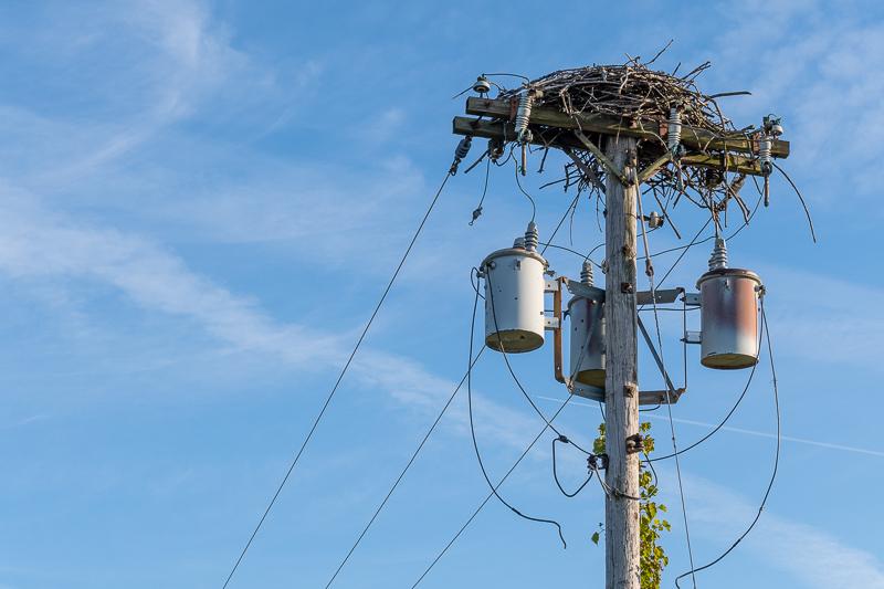 Montezuma National Wildlife Refuge Bald Eagle Nest